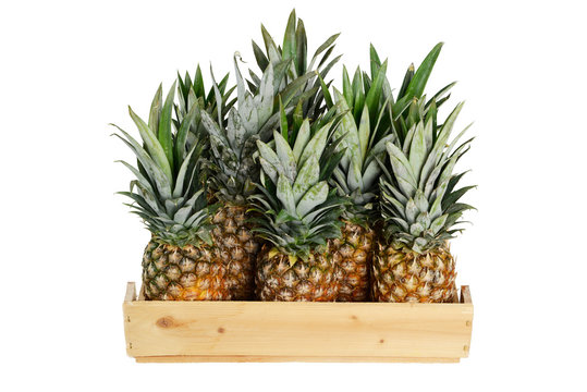 Pineapple in wooden box on white background