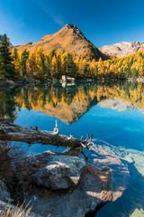Baumstamm im Lago di Saoseo im Herbst, Puschlav, Schweiz