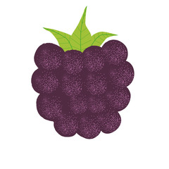 BlackBerry vector illustration