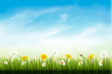 Nature background with dandelions. and daisies. Vector.