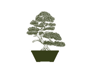 Bonsai Green Tree on the Pot for Home Interior Illustration Hand Drawing Symbol Logo Vector