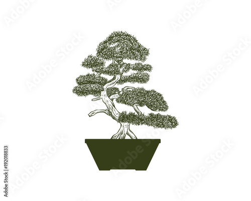 Bonsai Green Tree on the Pot for Home Interior Illustration Hand ...