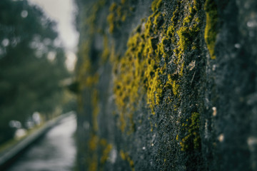 Old moss on the castle wall of baiona, galicia, spain