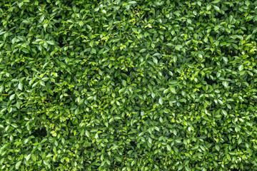Textured green vertical garden background Wall mural