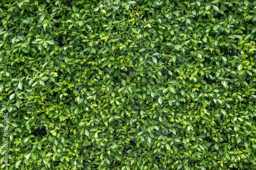 Textured green vertical garden background\