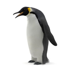 Emperor penguin. isolated on white. 3D illustration