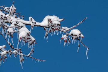 Snow and Ice on Crab Apple Tree