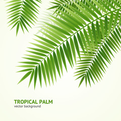 Realistic 3d Detailed Green Palm Tree Background Card. Vector