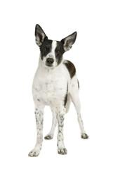 Stehender Mischlingshund sieht in die Kamera