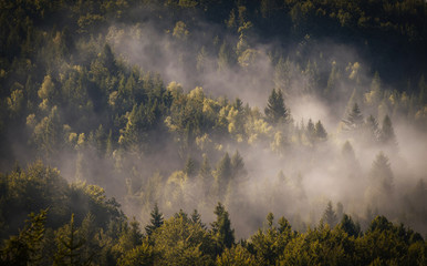Fog cover the forest.