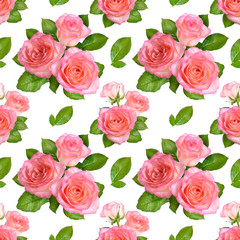 Seamless background with Pink roses. Isolated on white background
