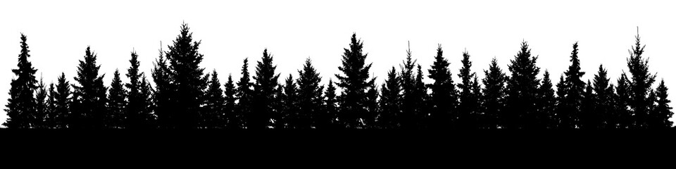 Forest of Christmas fir trees silhouette. Coniferous spruce panorama. Park of evergreen wood. Vector on white background Wall mural