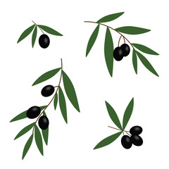 black olives branches with green leaves oil icon set vector