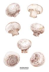 Botanical watercolor champignons