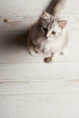 Funny playful kitty