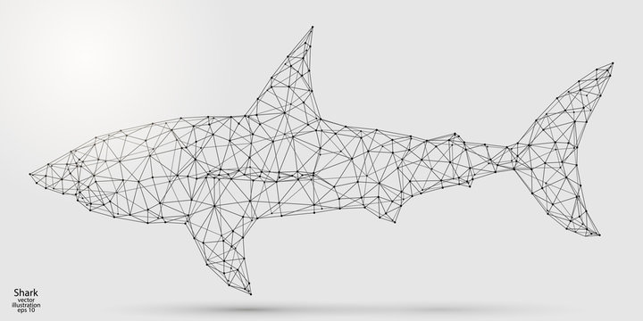 Abstract shark consists of lines and triangles. The illustration is made up of polygons and points, stars in the sky. Vector EPS 10.