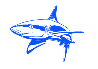Graphical blue shark isolated on white background,vector illustration