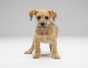 Small shaggy dog on white background