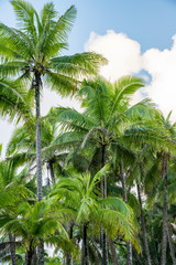 Palm Trees ©2017 Ranae Keane-Bamsey Photography www.EMotionGalleries.com