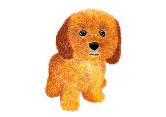 Dog. Сockapoo. Watercolor illustration.