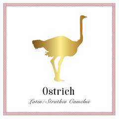 Ostrich Gold Gradient Illustration. Struthio Сamelus. Large Flightless Running Bird with Long Neck.