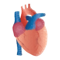 human heart polygon