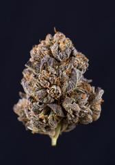 Single cannabis bud (berry noir strain) isolated on black