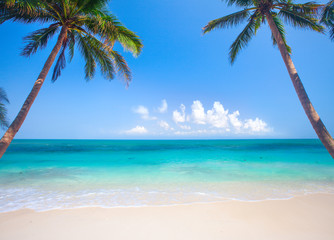Wall Mural - panoramic tropical beach with coconut palm