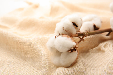 Cotton flowers on fabric, closeup