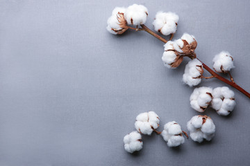 Cotton flowers on fabric, top view