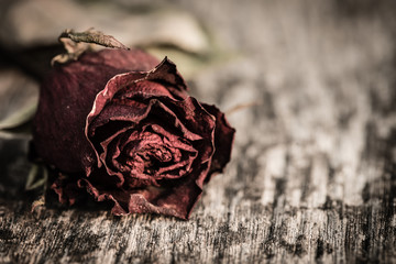 Closeup dried red rose, dead red rose on wooden background with vintage style. Broken hearted, Love, Wedding and Valentines day concept.
