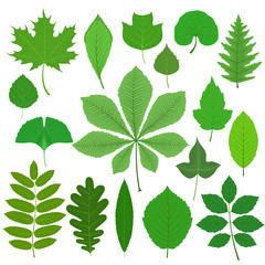 Set of different tree leaves isolated on white background. Vector illustration.
