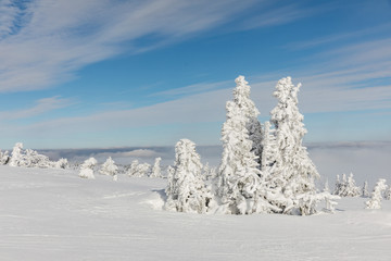 Beautiful winter landscape Krkonos on a sunny day. Winter ridges of the Krkonose Mountains. Trees covered with frost.