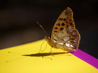 Schmetterling in Sonnenlicht
