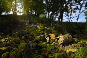 Steine mit Moos bedeckt im Gegenlicht