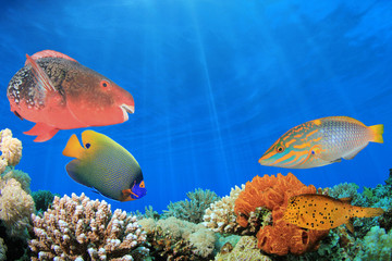 Composite image coral reef and tropical fish