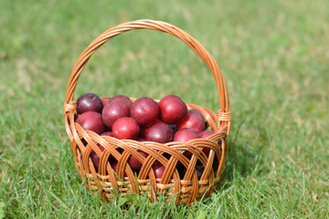a basket of plums on grass