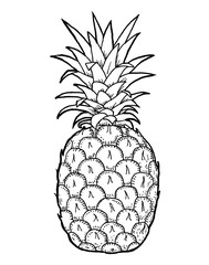 Pineapple fruit and leafs hand draw illustration