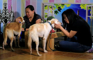 """Pet lovers with shelter dogs are seen during a """"Date with Dogs"""" inside the Philippine Animal Welfare Society (PAWS) headquarters in Quezon city, metro Manila"""