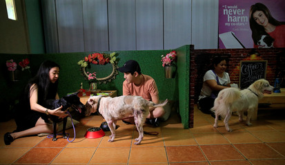"""Pet lovers with shelter dogs are seen during a """"Date with Dogs"""", inside the Philippine Animal Welfare Society (PAWS) headquarters in Quezon city, metro Manila"""