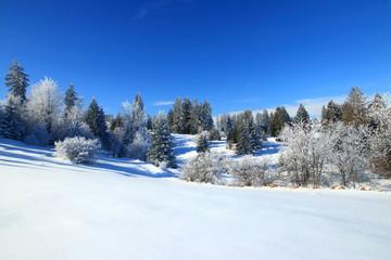 Winter landscape on mountain, frozen pine forest, Bosnia and Herzegovina