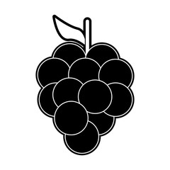 Grapes fruit isolated icon vector illustration graphic design