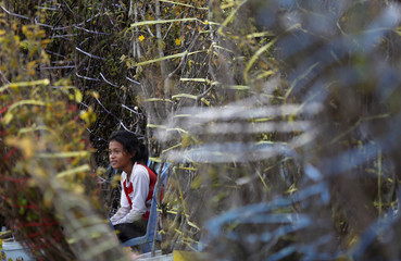 A girl rests near trees for sale ahead of Chinese Lunar New Year, on a street in Phnom Penh