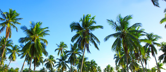 Palm trees and blue sky.