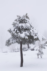 Trees in snowing landscape