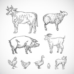 Hand Drawn Domestic Animals Set. A Collection of Pig, Cow, Goat, Lamb and Birds Silhouettes. Engraving Style Drawings.