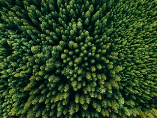 Foto op Canvas Bos Aerial top view of summer green trees in forest in rural Finland.