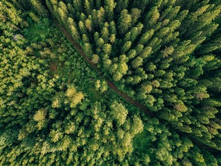 Foto auf AluDibond Wald Aerial top view of summer green trees and road in forest in rural Finland.
