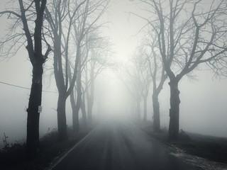 Strada con alberi e nebbia
