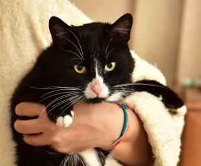 black with white cat on hands